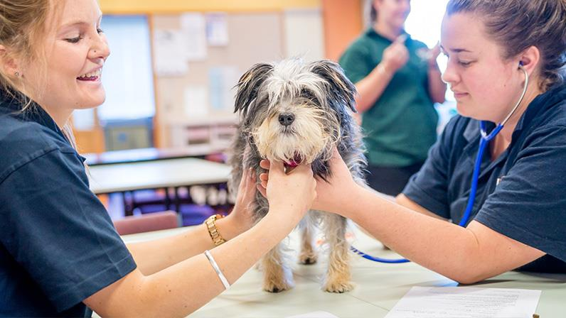 Veterinary Nursing students work with a dog at our Palmerston North campus